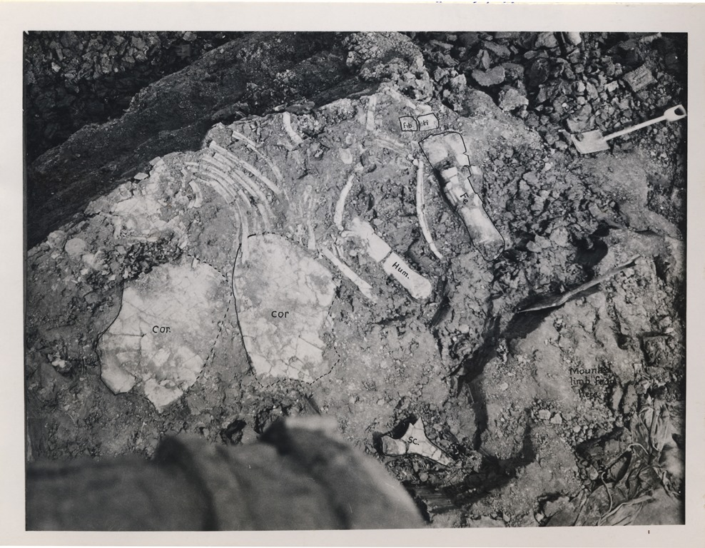 Photo of excavated bones