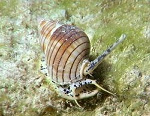 sedgwick museum wenlock creatures gastropods